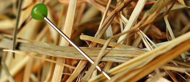 blogg neddle in the haystack