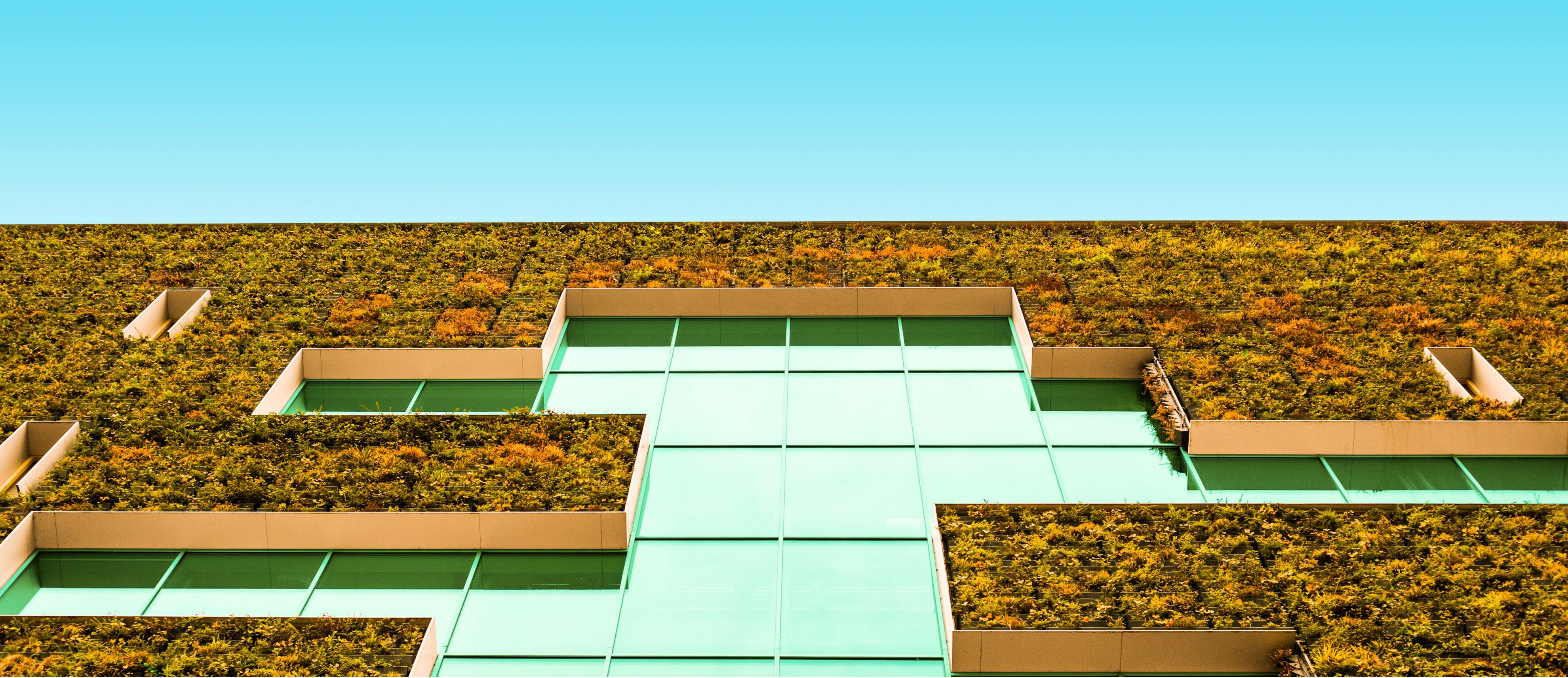 Bild på husvägg med växter